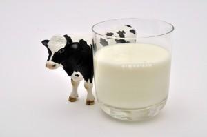 polémique lait de vache