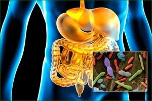 Flore digestive